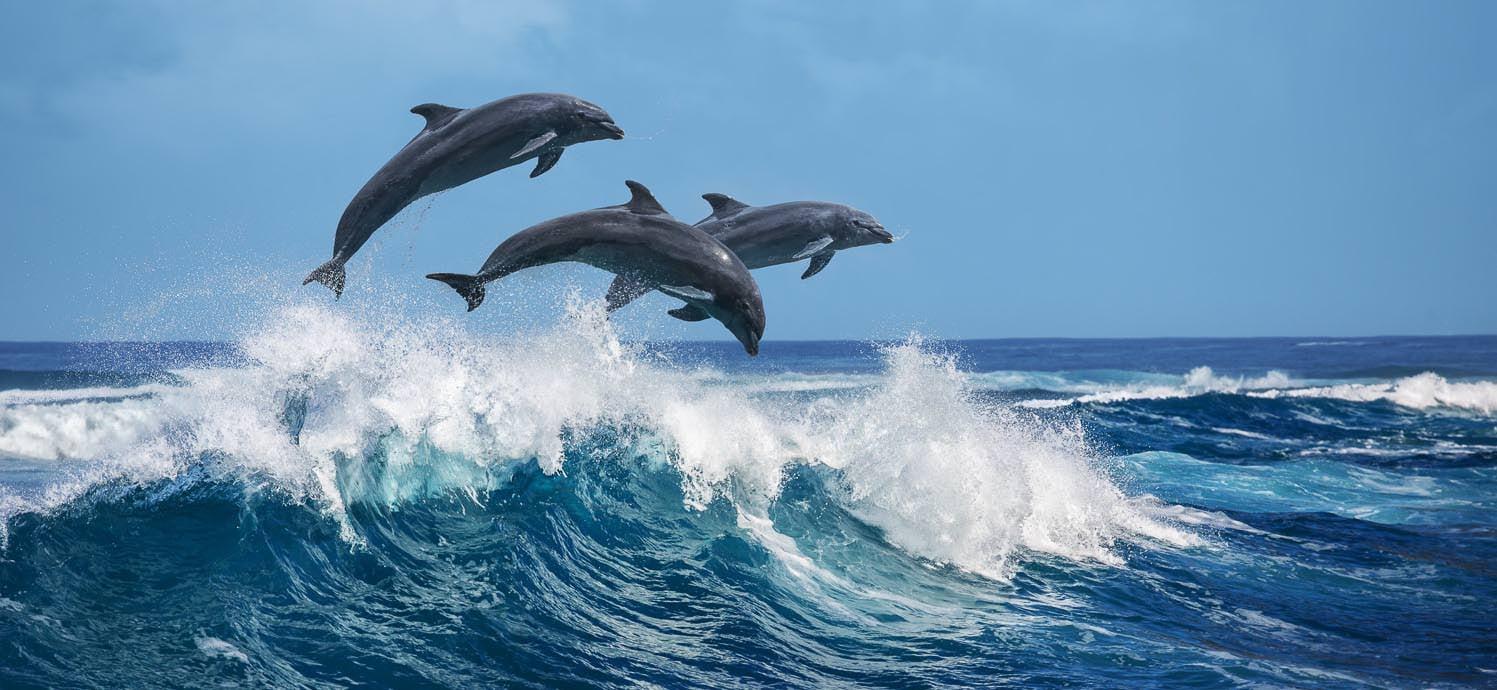 Dolphin Experience Hawaii Big Island