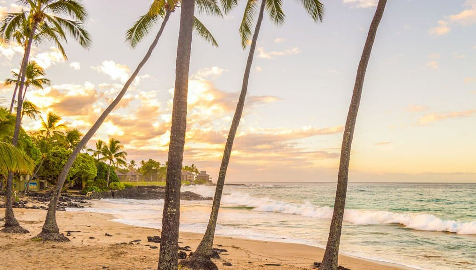 Coconut Palms at Magic Sands Beach, White Sands Beach Park