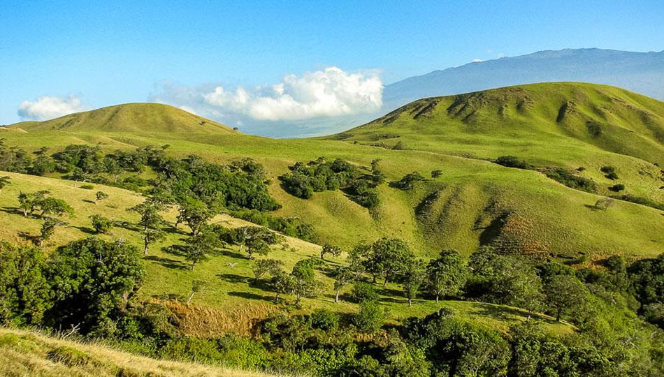 Kohala Mountain near Waimea