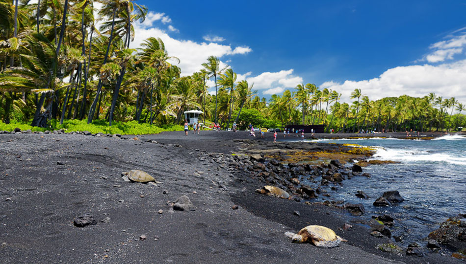 Green Sea Turtles resting on Punaluu Black Sand Beach