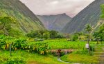 The Waipio Valley Shuttle takes you on a fantastic tour of the valley