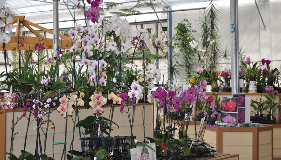 The Akatsuka Orchid Garden is a Big Island Botanical Garden
