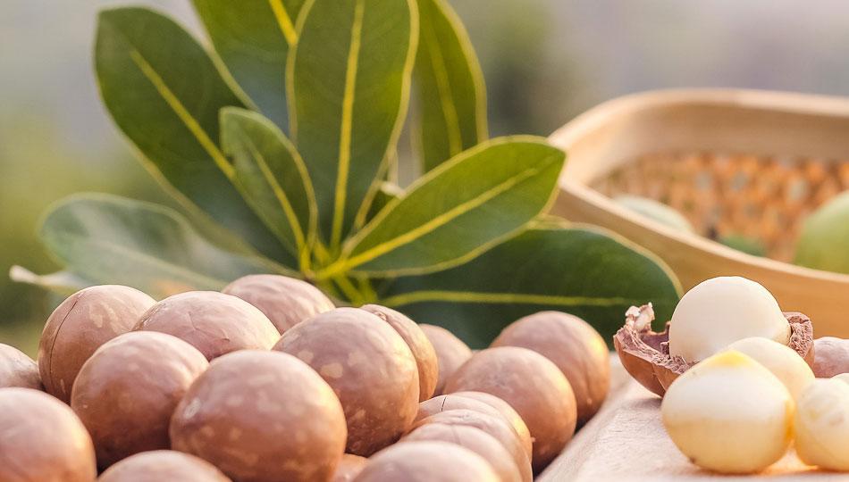 Farm Fresh Macadamia Nuts from the Big Island of Hawaii
