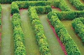 Botanical World Gardens Maze