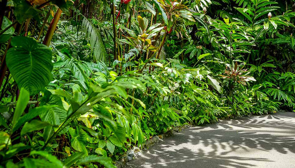 Botanical World Gardens Walkway