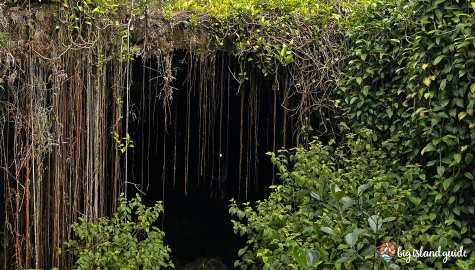 Kaumana Cave Entrance with Vines