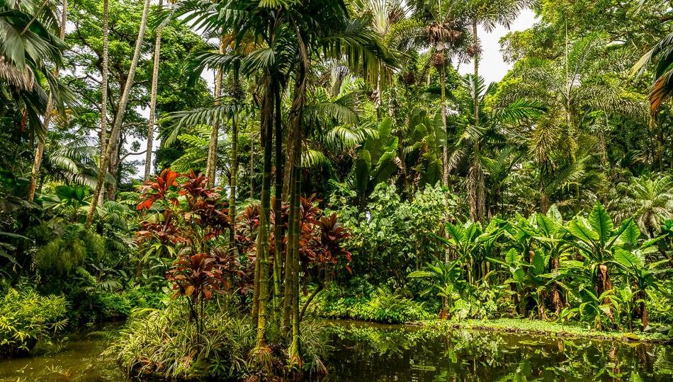 Hawaii Tropical Botanical Garden on the Big Island