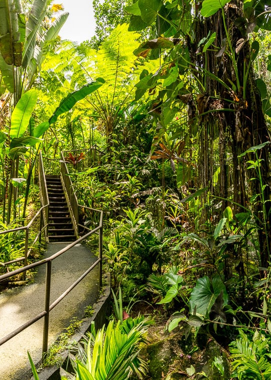 Hawaii Tropical Botanical Garden Walkway with stairs