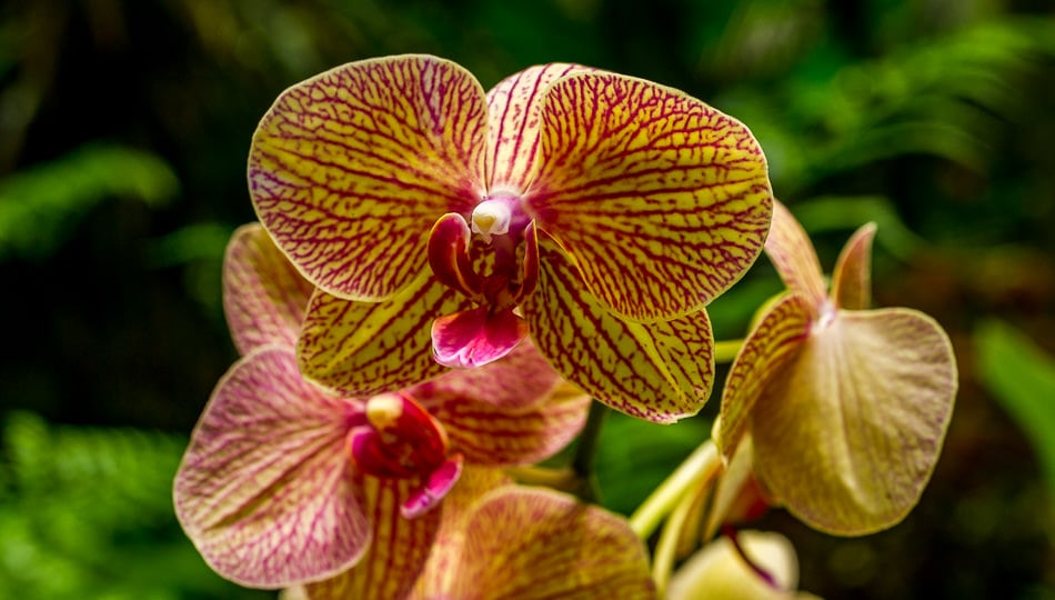 Orchids at the Hawaii Tropical Botanical Garden