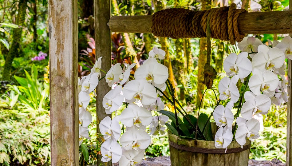 Hawaii Tropical Botanical Garden wishing well with orchids