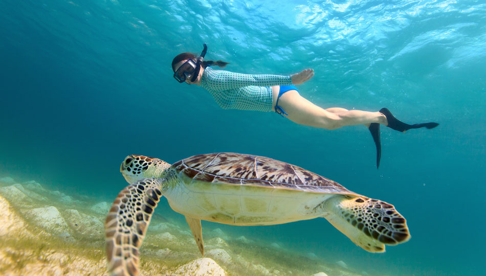 Some of the best snorkeling on the Big Island lets you see turtles up close