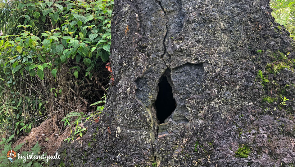A Crack in one of the Lava Trees