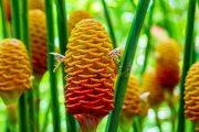 Big Island Botanical Garden Flowers