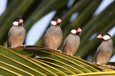 Hawaii Island birds